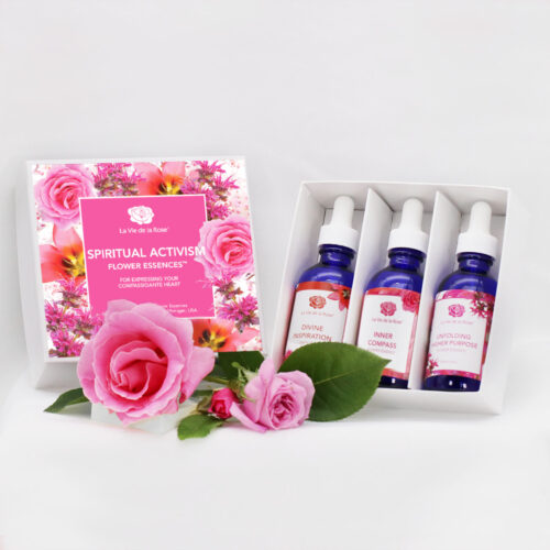 Spiritual Activism Flower Essences™ la vie de la rose