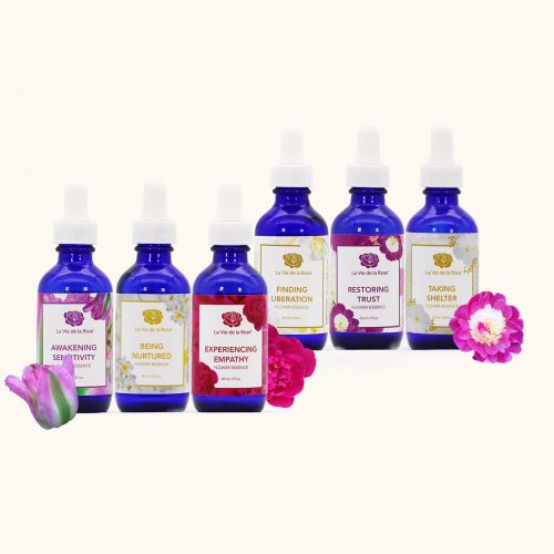 trauma recovery flower essences™ la vie de la rose
